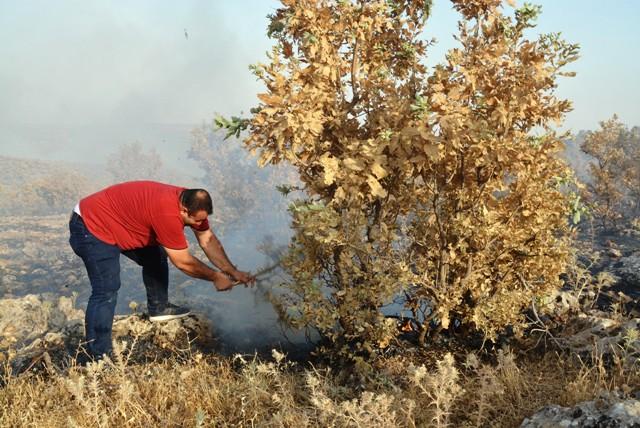 Nusaybin'de ormanlık alanda yangın