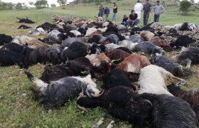 Yıldırım Çarptı: 1 Ölü 133 Hayvan telef oldu