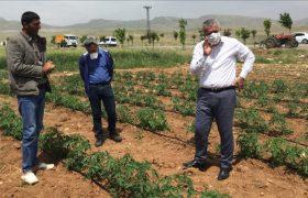 Mardin'de 200 dekar  alanda sebze üretecek