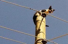 Elektrik direğinde mahsur kalan kedi kurtarıldı